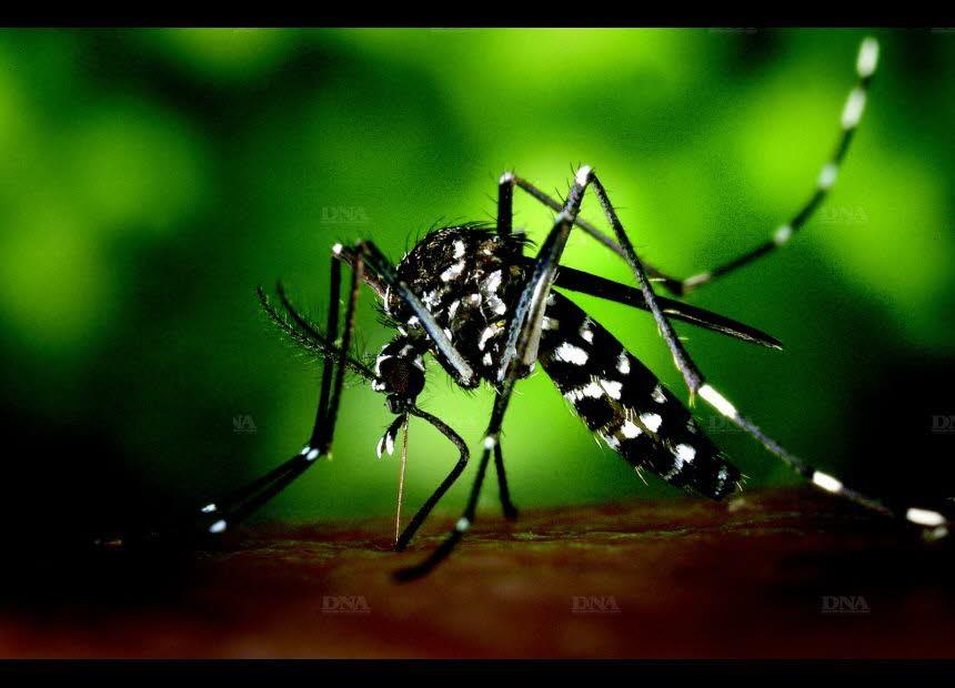moustique-tigre-ou-pas-ca-pique-dr-1536660627.jpg