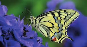 UE_biodiversité.jpeg