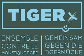 Tiger_projekt.png